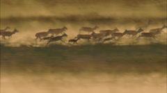 Grasslands Plain Prairie Deer Stock Footage