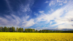 Summer canola field landscape, time-lapse. Stock Footage