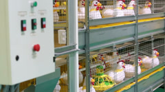 Demonstration of industrial incubator with soft toy chickens Stock Footage