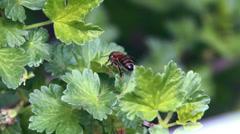 Bee green bush Stock Footage