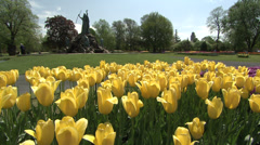 Yellow Tulips in Washington park, Albany, NY Stock Footage