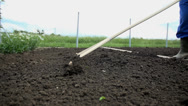 Stock Video Footage of Close low angle shot of loosening the soil with the rake