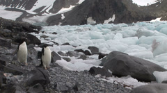 Hope Bay Antarctica Stock Footage