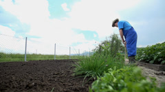 Grower lifts the board which was used to split the garden into divisions - stock footage