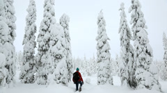 Riisitunturi NP male walker Spruces covered with tykky Lapland Finland - stock footage