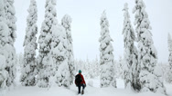 Stock Video Footage of Riisitunturi NP male walker Spruces covered with tykky Lapland Finland