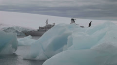Hope Bay Antarctica Stock Footage