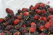 Stock Photo of mulberry