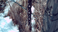 Stock Video Footage of Barbwire and Chain Fence