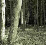 Mystery Forest Stock Photos