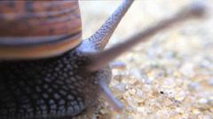 Small snail on sidewalker Stock Footage