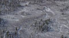 Frozen Tundra Elk Stock Footage