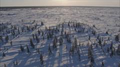 Snow sunrise sunset trees Stock Footage