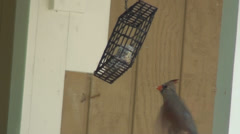 Female Cardinal Flying Up To Feeder In Slow Motion Stock Footage