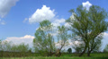 Spring sky, clouds and trees. Time lapse. HD Footage