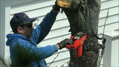 Stock Video Footage of Chain Saw tree cut, slow motion