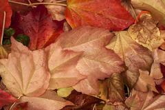 Fallen autumn wet leaves Stock Photos