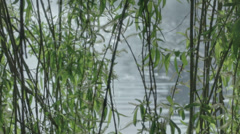 Glistening Sun Light in Pond Behind Willow Tree Branches - 29,97FPS NTSC Stock Footage