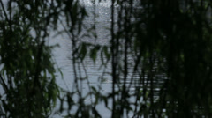 Glistening Water Behind Silhouetted Willow Tree Branches - 29,97FPS NTSC Stock Footage