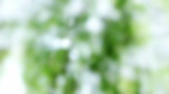 Blurred Green White Glistening Nature Background - 29,97FPS NTSC Stock Footage