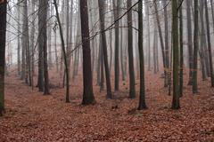 Hazy beach forest in winter Stock Photos