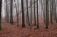 Stock Photo of Hazy beach forest in winter