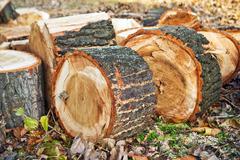 Biomass firewood - stock photo