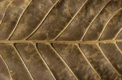 Dry leaf structure underside Stock Photos