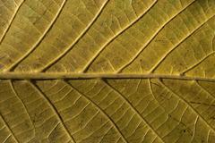 Leaf structure underside - stock photo