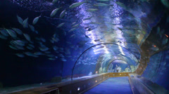 Valencia aquarium tunnel Stock Footage