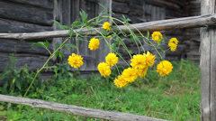 Yellow flowers close up in summertime Stock Footage