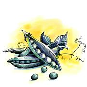 Peas. Watercolor illustration - stock illustration