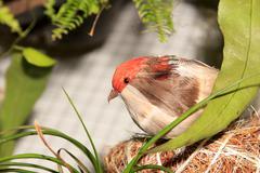 artificial bird - stock photo