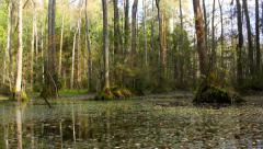 The ancient forest with reflections in the water Stock Footage