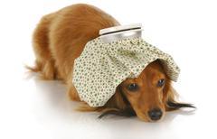 Sick dog Stock Photos