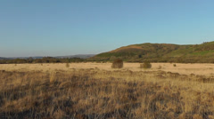 Welsh nature reserve Cors Caron on a sunny day Stock Footage