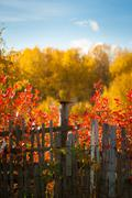 Trees positively ablaze with color during autumn in the park Stock Photos
