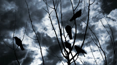 Crows In Tree In Lightning Storm For Halloween Stock Footage