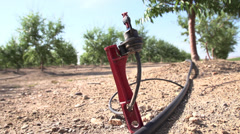 Sprinkler in a Dry Almond Orchard Stock Footage