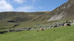 Soay sheep and visitors to the abandoned village Hirta, St Kilda, Scotland Stock Footage