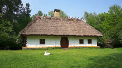 Village hut with a green lawn and a white goose on grass. Stock Footage