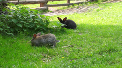 Two rabbits nibbling grass in nature Stock Footage