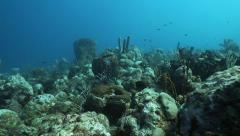 swim over of coral and open sea - stock footage