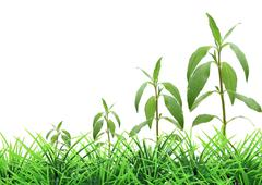 Stock Photo of concept of tree growing on grass