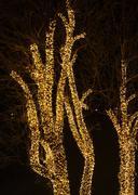 Tree and christmas lights Stock Photos