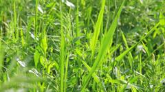 Closeup tilt shot of green vibrant grass in summer Stock Footage