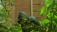 Stalker stalking through bushes Stock Footage