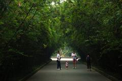 Bamboo Archway In Chengdu, China Stock Photos