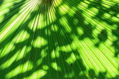 Palm leaves Stock Photos