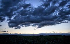 corn crop at dusk - stock photo